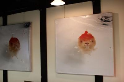 金魚アート1