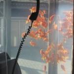 金魚電話ボックス2